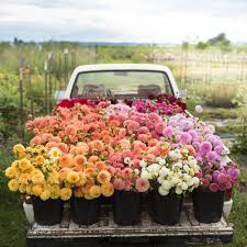 Print Farm Truck Filled With Flowers