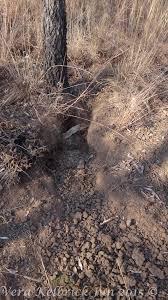 Porcupine Eating Pumpkin Gif by Gnawing Mammal 2016 06 13 Sambane Bush Lodge Blog Situated
