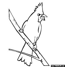Perched Cardinal Coloring Page
