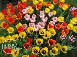 adr bulbs皰 offering 1200 varieties of flower bulbs