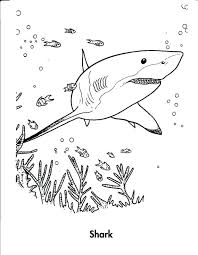 Shark Coloring Pages Printable Tiger Free Tale Page Medium Size