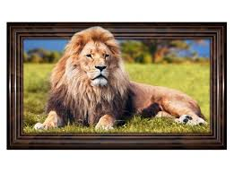 3d wandtattoo löwe mähne afrika savanne tier wandbild sticker selbstklebend wandmotiv wohnzimmer wand aufkleber 11e895