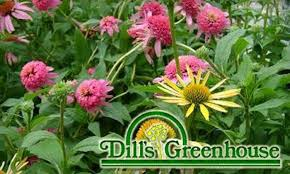 Dills Pumpkin Patch Columbus Ohio by Dill U0027s Greenhouse Columbus Deal Of The Day Groupon Columbus