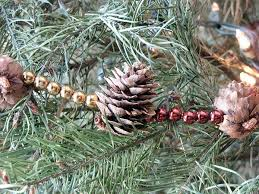 Sugar Or Aspirin For Christmas Tree by 5 Tips For Keeping Your Christmas Greenery Green Kcet
