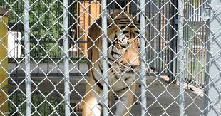 The Horror Of Louisiana's Gas Station Tiger