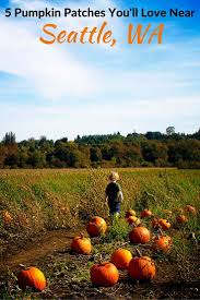 Pumpkin Patch Portland by Best 25 Pumpkin Patch Seattle Ideas On Pinterest Pumpkin Flavor