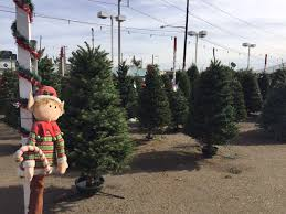 Where To Get The Best Christmas Trees In Los Angeles