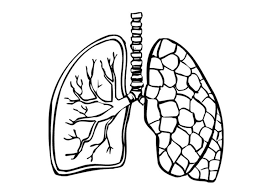 Coloring page lungs img 9488