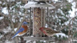 Hurricanes Harm Birds, Too: What You Can Do To Help Your Backyard ... Some Ways To Keep Our Backyard Birds Healthy Birds In The These Upcycled Diy Bird Feeders Are Perfect Addition Your Two American Goldfinches Perch On A Bird Feeder Eating Top 10 Backyard Feeding Mistakes Feeder Young Blue Jay First Time Youtube With Stock Photo Image 15090788 Birdfeeding 101 Lover 6 Tips For Heritage Farm Gardenlong Food Haing From A Tree Gallery13 At Chickadee Gardens Visitors North Andover Ma