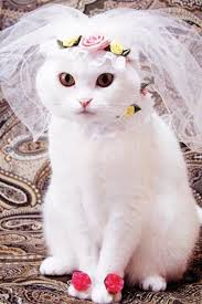 cat wedding dress 100 best cats in costumes images on animals cats and