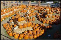 Macdonald Ranch Pumpkin Patch Hours by Discover Arizona Now