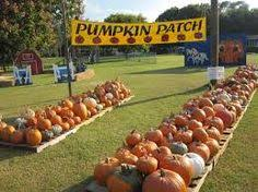 Northeast Iowa Pumpkin Patches by Pumpkin Patch With Wagon Rides In The Background At Pinter U0027s