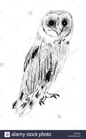 Drawing Of Sitting Barn Owl (Tyto Alba Stock Photo, Royalty Free ... Country Barn Art Projects For Kids Drawing Red Silo Stock Vector 22070497 Shutterstock Gallery Of Alpine Apartment Ofis Architects 56 House Ground Plan Drawings Imanada Besf Of Ideas Modern Best Custom Florida House Plans Mangrove Bay Design Enchanted Owl Drawing Spiral Notebooks By Stasiach Redbubble Top 91 Owl Clipart Free Spot Drawn Barn Coloring Page Pencil And In Color Drawn Pattern A If Youd Like To Join Me Cookie