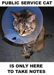 service cats service cats on service cat knows his