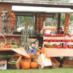 Jacksonville Nc Pumpkin Patch by The Best Pumpkin Patches And Corn Mazes In Jacksonville