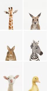 Leopard Print Bathroom Wall Decor by Best 25 Animal Prints Ideas On Pinterest Nursery Decor Nursery