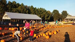 Pumpkin Patch Nashville Area by Patch Nashville Tennessee