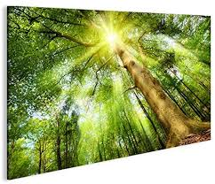 bild bilder auf leinwand leuchtender wald sonne bäume 1p