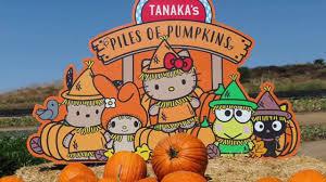 Tanaka Farms Pumpkin Patch by Tanaka Farm Pumpkin Patch Youtube