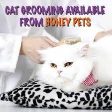 mobile cat grooming mobile cat grooming mobile pet grooming