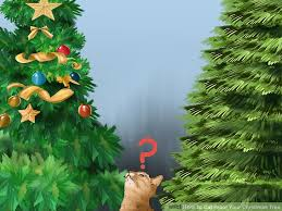 Aspirin Keep Christmas Trees Alive by 3 Ways To Cat Proof Your Christmas Tree Wikihow
