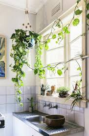 le suspendue cuisine plantes suspendues fonctionnelles et décoratives apartments