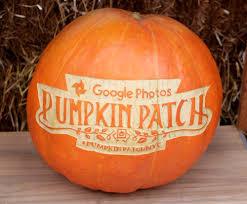 Preserving A Carved Pumpkin by Maniac Pumpkin Carvers