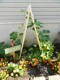 Pick Of The Patch Pumpkins San Carlos by Pumpkin Trellis Trellis Here Is The Link To Instructions I
