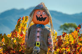 Napa Pumpkin Patch by Best Fall Foliage Drives In Northern California