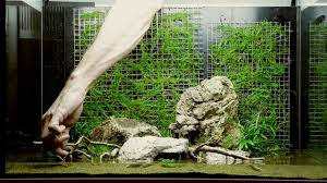 Layout 74 By Tropica - YouTube Aquascaping Lab How To Mtain Trimming Clean And Change Aquascape Pinterest Red Rock Journal By James Findley The Green Machine Pennywort Brazilian Aquatic Plant Google Search Aquascaping Giuseppe Nisi Giuseppe_nisi_aquascaping Instagram Aquarium Sand Layouts Nature For Simons Blog Layout Ideas Tag Layout Aquascape Marcel Dykierek Aqua Rebell Shaping I Undaterworlds 85 Ian Holdich Tropica Plants