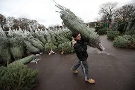 Tannenbaum Christmas Tree Farm Michigan by When Should You Buy A Christmas Tree Tree Shortages Increase