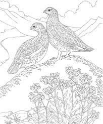 Hard Bird Coloring Pages For Adults
