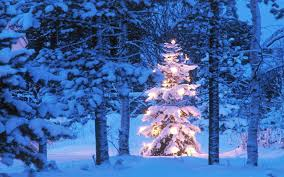 Spiral Lighted Christmas Trees Outdoor by Christmas Stunning Outdoor Lighted Christmasee Image Ideas