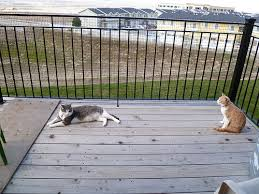 cats on deck why does the bird sing cat proof your deck for less than 20 woot