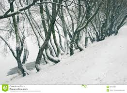 Bent Tree Trunks By Winter Stock Image. Image Of Branches - 83721531 Expert Claims Mysterious Bent Trees Were Secret Native Americans Crooked Forest Wikipedia Stp77089 Greenery And Tree Trunks In Forest Karjat Mahashtra Indian Bent Trees History Or Legend Show Me Oz Larry The Lorry More Big Trucks For Children Geckos Garage New Trucks Bodies Equipment Trailers Seen At Wasteexpo How To Fix A Leaning Tree I Love The Wooden Beds Rarin To Go Ford Mysterious Are Actually American Trail Markers Wind Stock Images 542 Photos Bend Diamonds Ieee Spectrum Black White Alamy