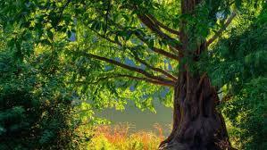 Where Do Oak Trees Grow Referencecom Growing Room Live