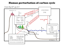 Define Carbon Sink Geography by Carbon Cycling In The Earth U0027s System Facts At Geochembio