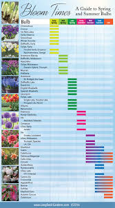 bloom time chart for and summer bulbs longfield gardens