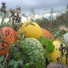 Pumpkin Patch Near Killeen Tx by 146 Best Texas Images On Pinterest Houston Tx Texas And Texas