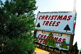 Eustis Christmas Tree Farm by 10 Best Christmas Tree Farms Fun Christmas Tree Farms To Visit