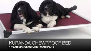 Chewproof Dog Bed by Kuranda Chew Proof Dog Bed Review Youtube