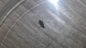 kleine schwarze fliegen s insekten schädlinge fliege