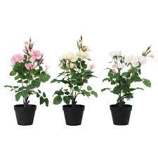 Fake Plants For The Bathroom by Plants Plant Pots U0026 Stands Plants Ikea