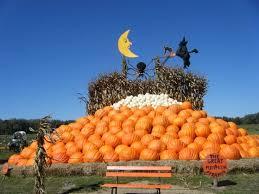 Pumpkin Picking In Ct by 39 Best Halloween Thanksgiving Fall Pumpkin Farms U0026 Patches