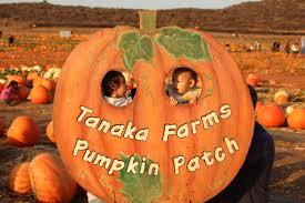 Tanaka Farms Pumpkin Patch Directions by Tanaka Farms Nurse Frugal