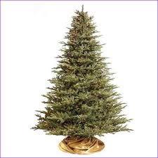 Fraser Christmas Trees Uk by Fraser Fir Christmas Tree Uk Home Design Ideas