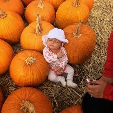 Sunnyside Pumpkin Patch Kansas by October 2014 Happily Ever Parker