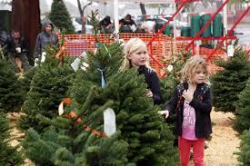 Christmas Tree Sales In Napa