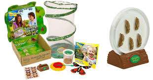 Amazon Insect Lore Live Butterfly Growing Kit Gift Set ly