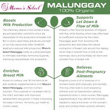 Organic Malunggay | Mama's Select Breastfeeding Supplement Nursing Lactation Plus Mamas Latched Mama Home Facebook Catalina Island Flyer Coupons Discounts 100 Acres Manor Coupon Organic Malunggay Select Mountain Creek Coupon Deals Best Buy In Bowling Green Ky Carseatblog The Most Trusted Source For Car Seat Reviews